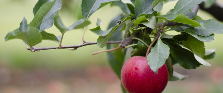Photo Post :: Apple Picking